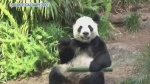 Pandas closer to heading home