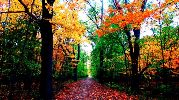 Fall leaves and decorations in Windsor-Essex.(Submitted by Zaklina Miletic Soldat)