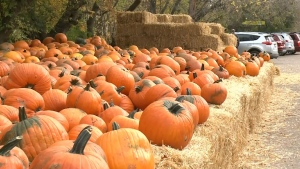 Fall businesses adapting to new guidelines