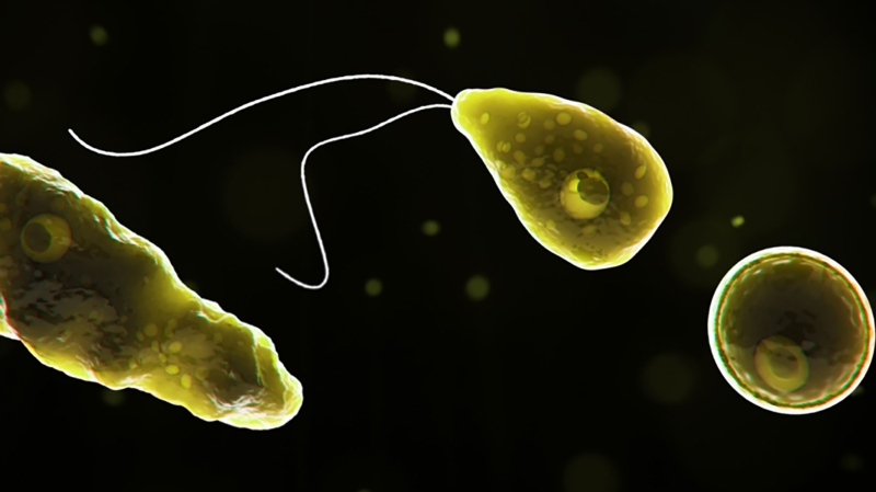 Naegleria fowleri, a brain-eating amoeba, was found in a Texas water supply. (Centers for Disease Control and Prevention)