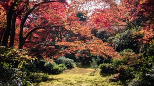 Various Acer trees, commonly known as maple trees, are seen in this file photo. (Satoshi Hirayama/Pexels)