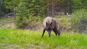 Cameras reveal impact on wildlife