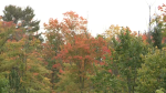 Ottawa fall