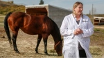 Dr. Ashley Whitehead, a senior instructor at the University of Calgary, Faculty of Veterinary Medicine, speaks about Potomac horse fever in Calgary, Alta., Tuesday, Sept. 22, 2020.THE CANADIAN PRESS/Jeff McIntosh