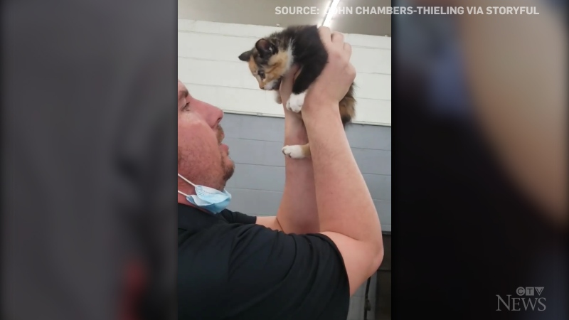 Two mechanics in Utah had to dismantle the dashboard of a vehicle to free a rescue kitten that got stuck inside.