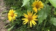 Promoting biodiversity in Sudbury