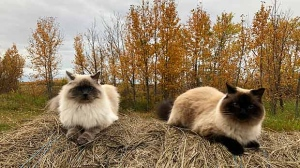 Skye and Sugar in Lundar. Photo by Darlene Burke.