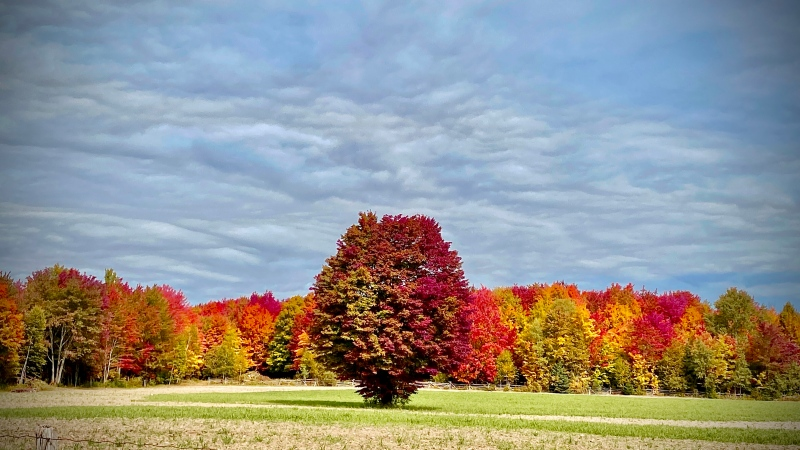 Fall Colours near Perth. (Brian Crawford/CTV Viewer)