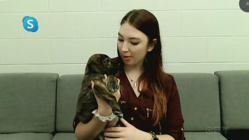 Saskatoon SPCA
