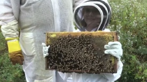 Renee McCumber is raising money to adopt as many honey bee hives as she can.