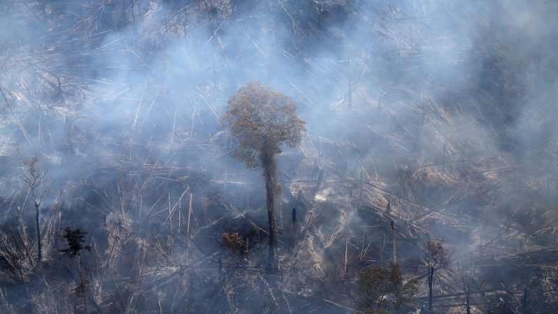 Deforestation is a major threat to biodiversity. (Ricardo Moraes/Reuters)