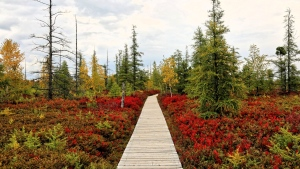 Spent the morning at the Mer Blue Bog and taking in all the lovely colours. (Dan Leblanc/CTV Viewer)