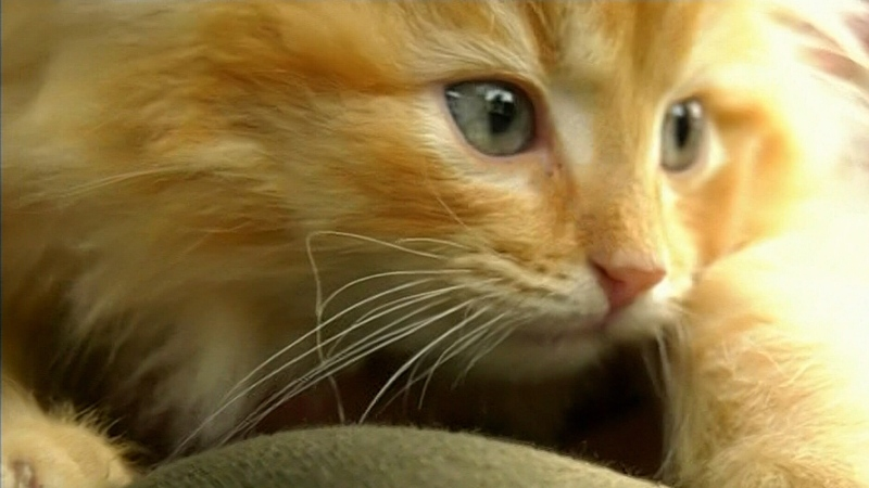 Cat rescue outraged over alleged animal abuse