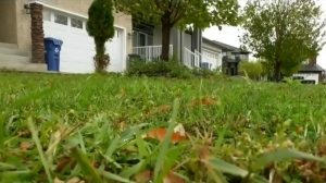 Homeowner fights city bill for mowing lawn