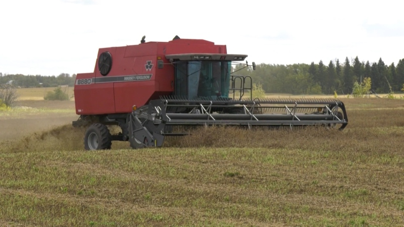 A farmer harvesting crops with a combine. Sept. 30, 2020. (CTV News Edmonton)