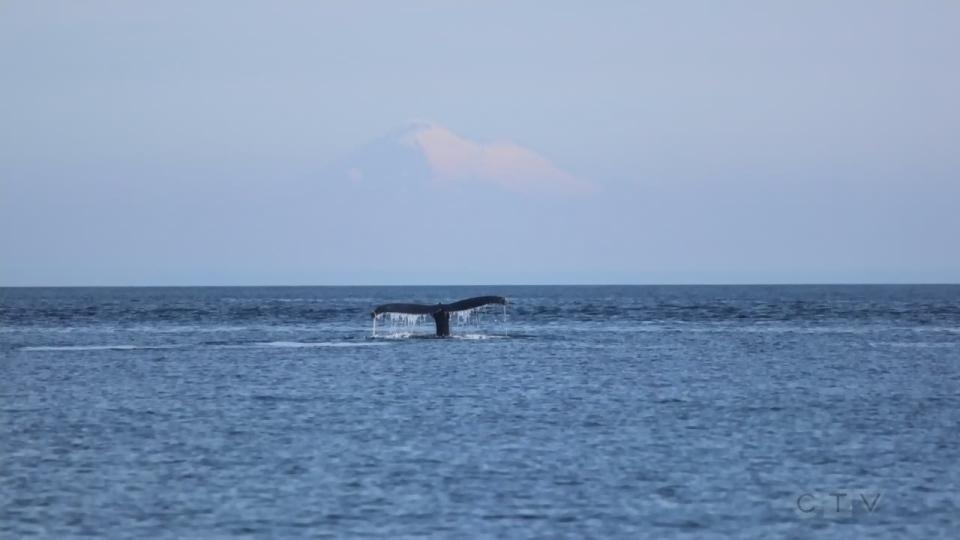 Sawatsky Sign-Off- Whale of a Tale