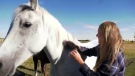 Southern Alberta horse owners are being warned about a new fever.