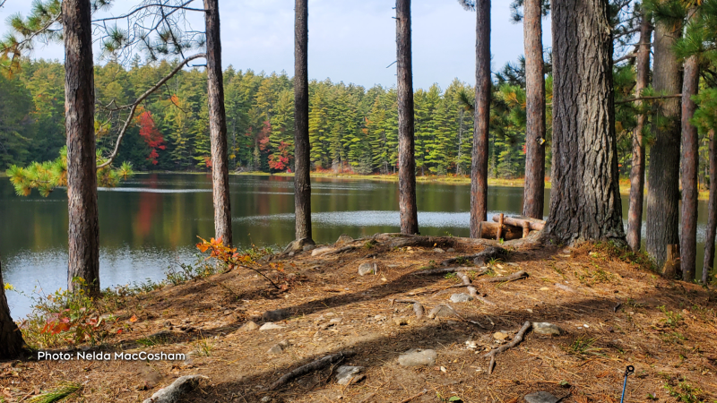 Autumn in Algonquin Park. (Nelda MacCosham/CTV Viewer)
