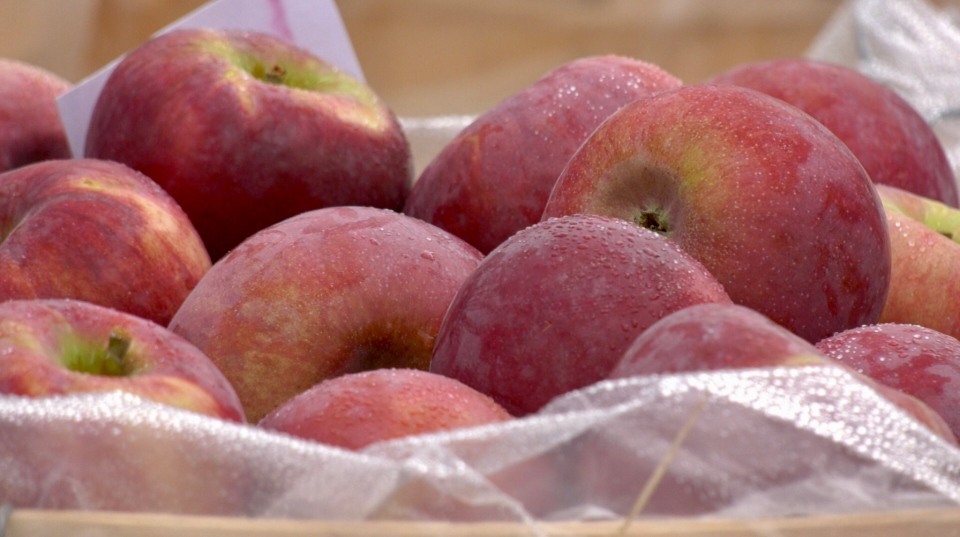 Northern Spy is a favourite type of apple for making pies.  It's a rare one these days, but it was available by the bushel at the annual 'Apple Fest' in Downtown Timmins. (Lydia Chubak/CTV News)