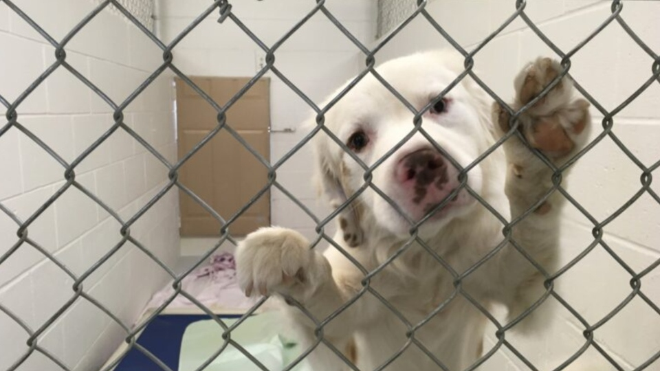 The BC SPCA is caring for 97 dogs, cats and horses that were seized from a breeder in Princeton on Sept. 23, 2020. (BC SPCA)
