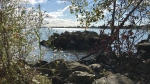 Peche Island features about 100 acres of naturalized park with walking trails and remnants of Hiram Walker's summer place on Oct. 2, 2020. (Rich Garton / CTV Windsor)