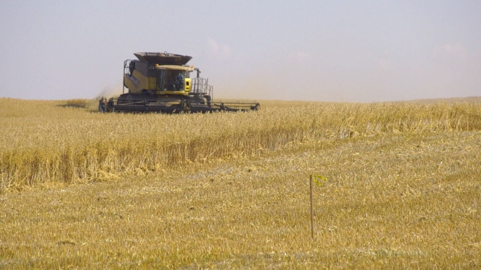 Across the province, 68 per cent of crops have been combined, according to the Sept. 29, 2020, Alberta Crop Report.