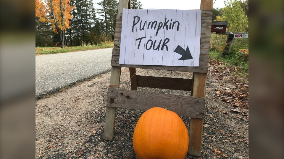 The Great Pumpkin Tour event was the first of its kind in Powassan and 16 different locations were signed up for the community to come out and visit. Oct.3/20 (Alana Pickrell/CTV News Northern Ontario)