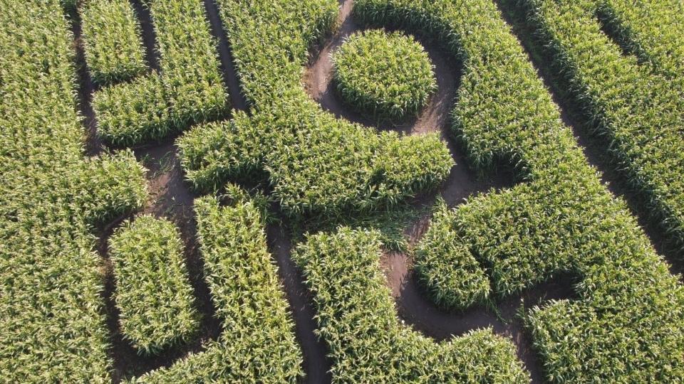 Corn maze vandalism