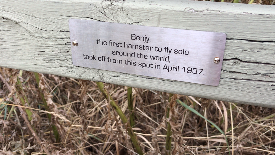 A prankster added engraved metal plaques with a comedic tinge to benches in Bowmont Park in northwest Calgary this fall.