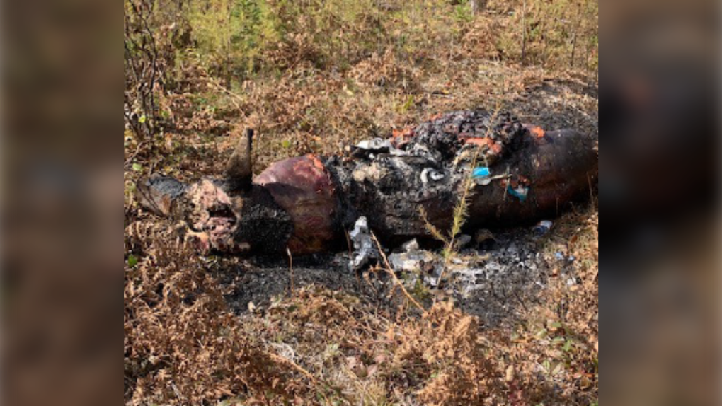 Moose carcass burned after being shot illegally