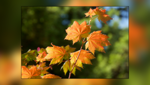 Picture This: Fall Colours