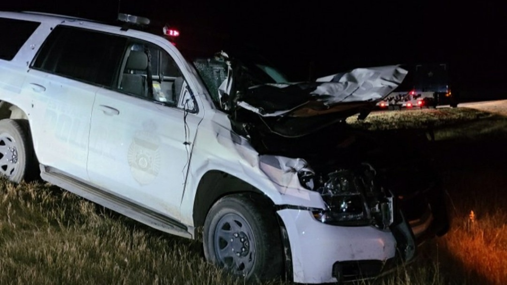 Estevan police officer hits moose