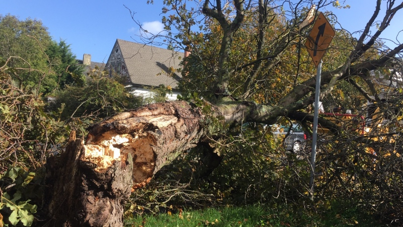 Southeast winds of 70 km/h to 90 km/h could damage property in the area, Environment Canada warned. (CTV News)