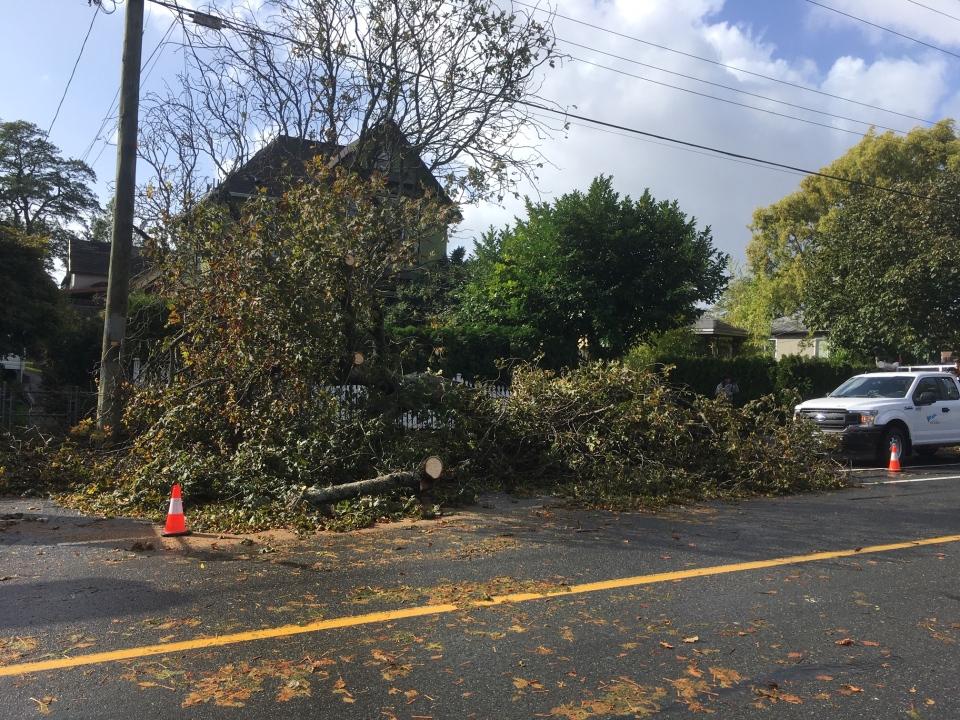 fallen tree wind