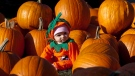A child wears a pumpkin costume, surrounded by pumpkins at Saunders Farm in Munster, Ont., just west of Ottawa on Sunday, Oct. 18, 2009. THE CANADIAN PRESS/Pawel Dwulit