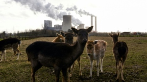 The study found that emissions from the power sector fell 22 per cent during the first six months of 2020. (AFP)