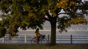 A cyclist rides under a tree as fog blankets the Rideau Canal in Ottawa, on Wednesday, Oct. 14, 2020. (Justin Tang/THE CANADIAN PRESS)