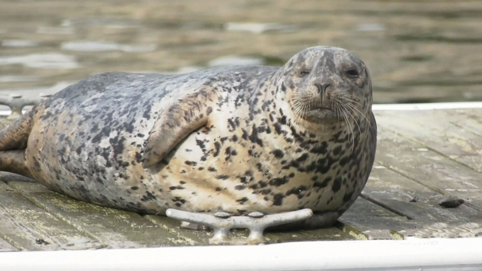 Shelter for seals removed from harbour