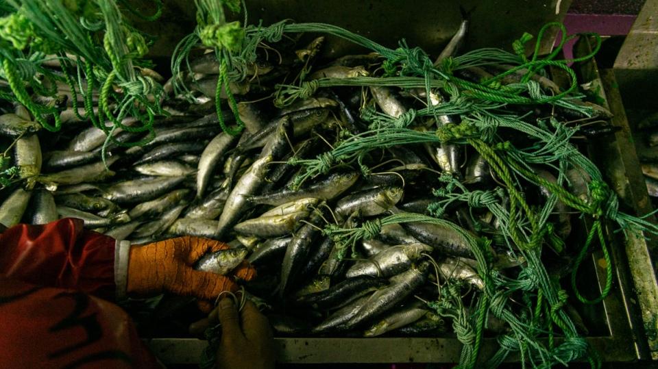 China's global fishing dominance
