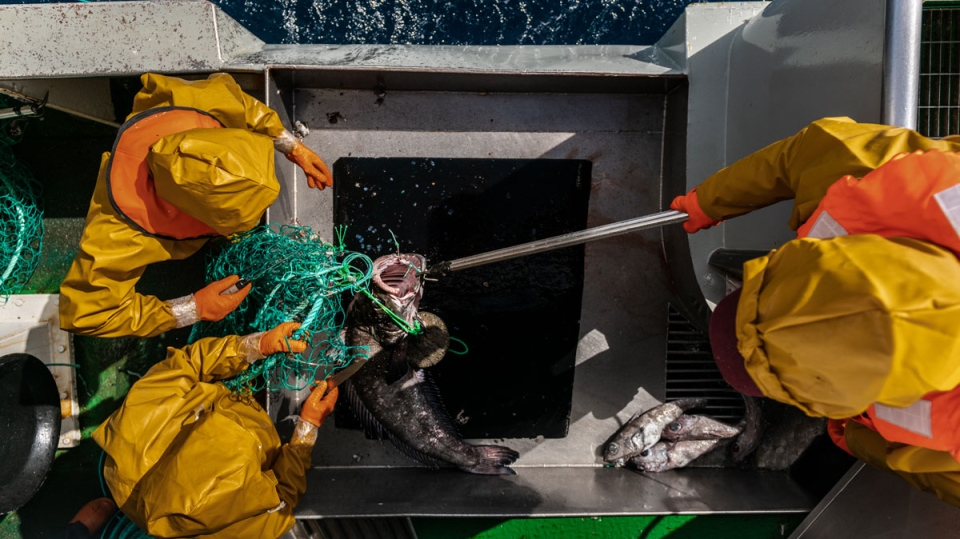 Aerial shot of the crew catching fish, in January 2019, Antarctica. (The Outlaw Ocean Project)