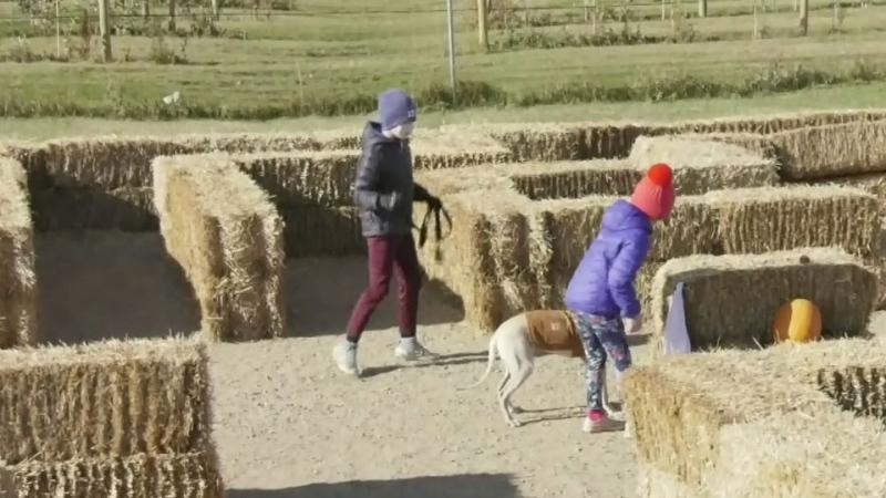 Halloween dog maze fundraiser
