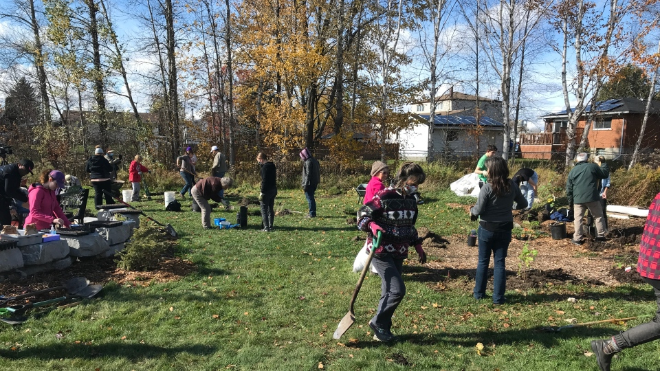 Volunteers at Chelmsford's Cote Park came with shovels and wheelbarrows in hand while Sudbury Shared Harvest supplied the dirt, materials and plants for an edible forest garden. Oct.17/20 (Ian Campbell/CTV News Northern Ontario)