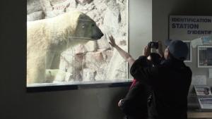 Update from the Cochrane Polar Bear Habitat