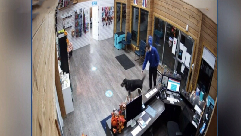 Dog walks itself to pet spa after escaping yard