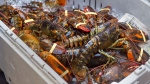 A crate of lobsters sits on the sidewalk as Cheryl Maloney, a member of the Sipekne'katik First Nation, sells lobster outside the legislature in Halifax on Friday, Oct. 16, 2020. Tensions remain high over an Indigenous-led lobster fishery, based on their treaty rights, as non-Indigenous fishermen want federal regulations enforced to address their concerns about conservation of the resource. THE CANADIAN PRESS /Andrew Vaughan