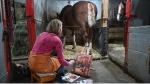 Karen Bailey paints inside Cundell Stables. (Joel Haslam / CTV)