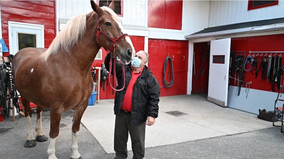 John Cundell with a horse from his stable (Joel Haslam / CTV)