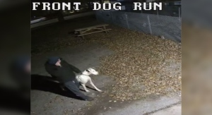An image from surveillance video shows a dog being dropped of at the Humane Society of London and Middlesex in London, Ont. on Friday, Oct. 16, 2020. (Source: HSLM / Facebook)