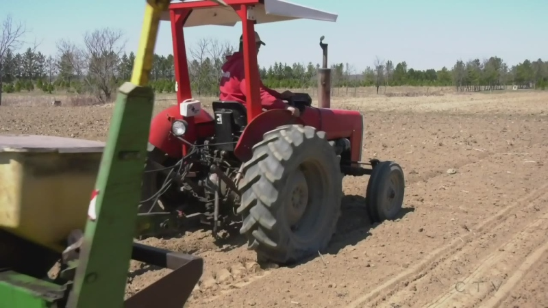 Growing northern Ont.'s agriculture sector