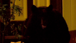 A black bear helped itself to pumpkins on the front porch of a home in southwest Calgary Monday night
